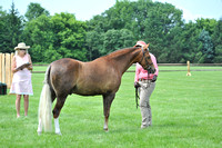427. Pony Three Year Old Colts or Geldings